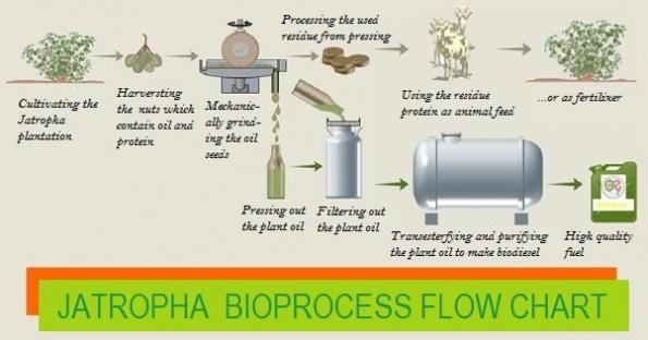 JAPTOPHA_biodiesel_process